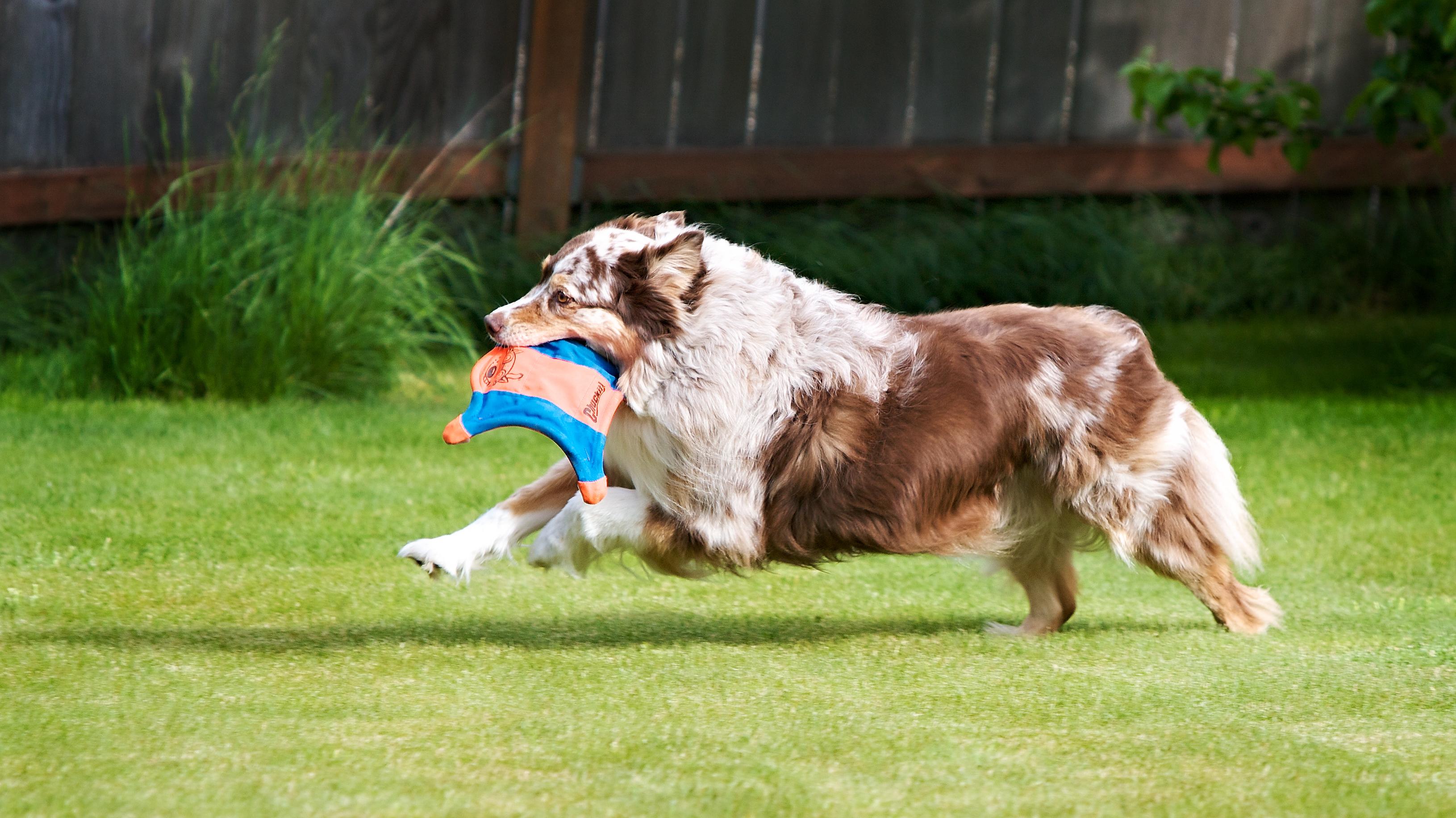 Healthy Pets are Happy Pets